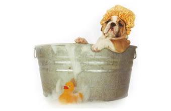 Zoomed Clínica Veterinária e Pet Shop